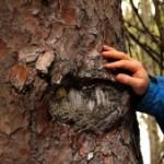 skog-och-manniskor-bild-ur-300x169